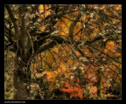 Branching out by marlix