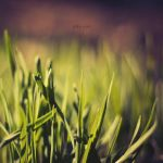 Green by odpium