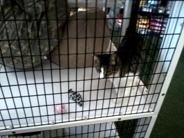 pet supermarket cat of the day 1/8/13 by michelous