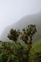 Vegetation of Mount PELEE in clouds by A1Z2E3R