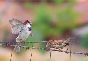 Birds' fight by corsuse