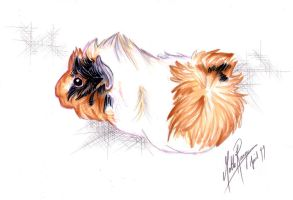 Guinea pig markers - Sappho by norsepearl