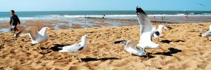 Seagulls on the land by laventa