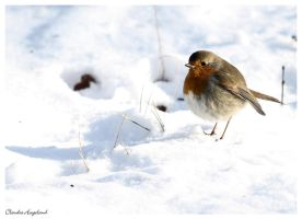 Small bird in the snow by Claudia008