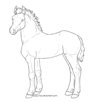 Free Lines: Foal by sazzy-riza