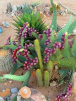 all the pretty cactus by MartianRaindrop42