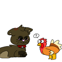 LOCAL ANGERY CAT FIGHTS TURKEY by Apletete