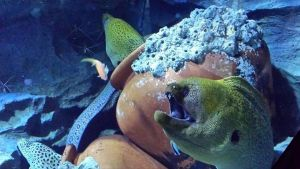 Moray Eels by Roses-and-Feathers