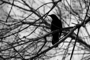 The raven in the dark by Askingtoattackmeghan
