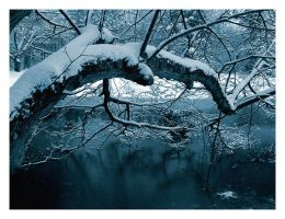 Winter Pond - The Linden Tree by melissasigalovskaya