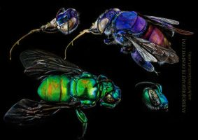 Orchid Bees by AmBr0