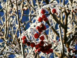 rowanberry2 by no-named-93