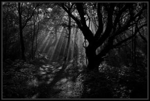 Autumn Woodland by grimleyfiendish