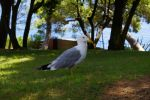 Seagull by FLYP93