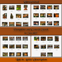 Pumpkin and Gourd Preview Pane by WDWParksGal-Stock