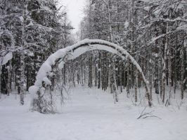 Snowy Trees Arch by linderel