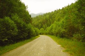 The road in the woods by Tumana-stock