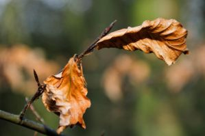 Rusty leafs or leaves? by Jon4H