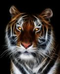 Glowing Tiger Vol.2 by mceric