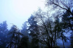Misty Morning by amandaWAY