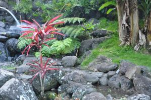 Hawaii Garden Stock 1 by Spiteful-Pie-Stock