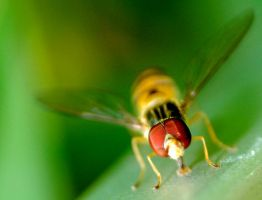 HoverFly by Squadz2000