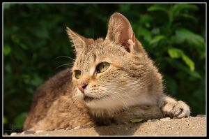 cat by The-Golden-Brown