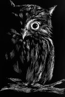 Scratch Board Owl by kpinedo