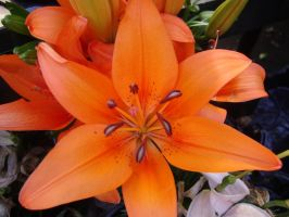 Orange lily by versaillesjewels