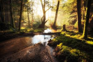 Shiny Morning by FlorentCourty