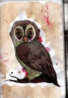Owl by naidface