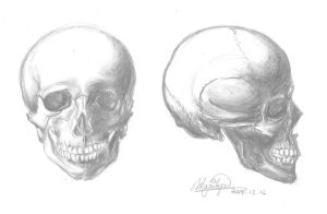 Skull - front and side view by MimiMarilyn