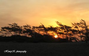 Sunset-behind-trees by fotoponono