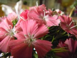 Pink Flowers by The-Lighted-Soul