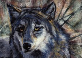 Wolf in Tall Grass by J-A-N-I-N-E