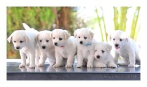 Amiguitos blancos - White little friends by Khaotico