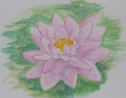 Pink Lilly by Dicegirl14395