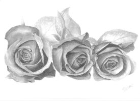 Roses by one-film-one-drawing