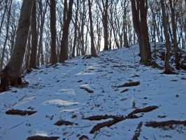 Up The Hill I. by csibecsont