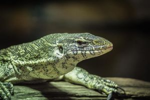 The Lizard by BradleyDeano