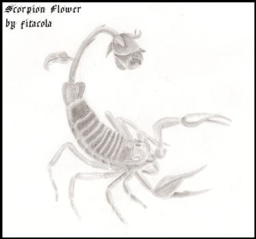 Scorpion Flower by fitacola