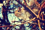 Cute Squirrel at Hyde Park by TheLovingKind89