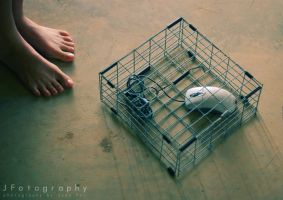 Mouse Trap by JeanFan