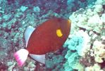 Old Fish Pictures 3 by bluebellangel19smj