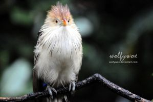 All Fluffed Up by wolfywox