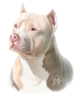 White Red  Pitbull Portrait by RedEyedDemon