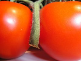Tomatoes 6 by stock1-2-3