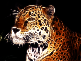 Indian Leopard by Maszrum