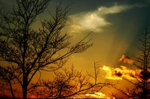 Sky Of Gold by LDFranklin