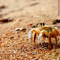 feelin' crabby by kayaksailor
